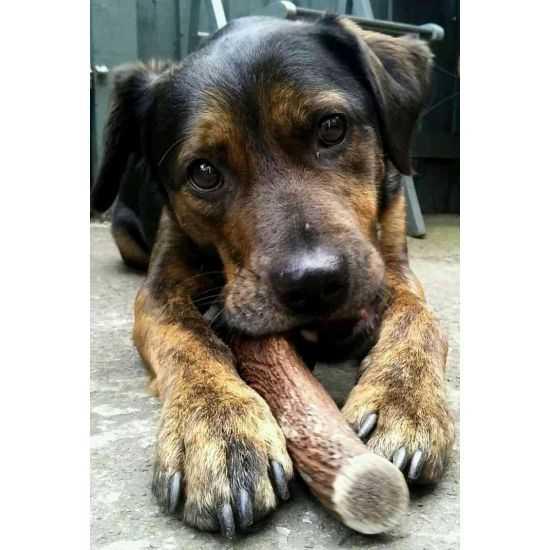 Elnio ragai natūralus kramtalas šunims