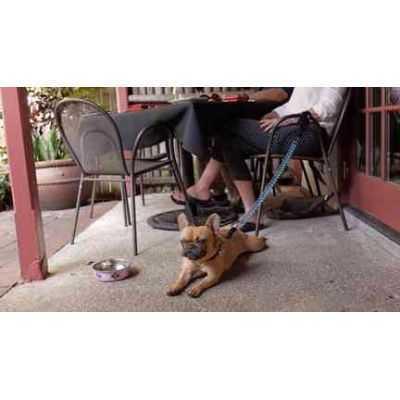 K9 Coil Leash pavadėlis bėgimui su šunimi