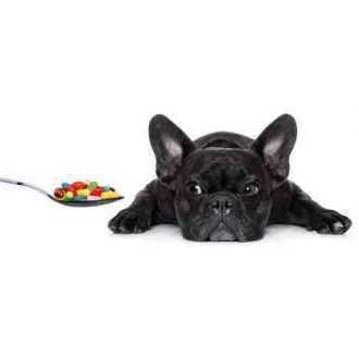 Vitaminai, maisto papildai šunims (seniems, mažiems) | Alphazoo.lt
