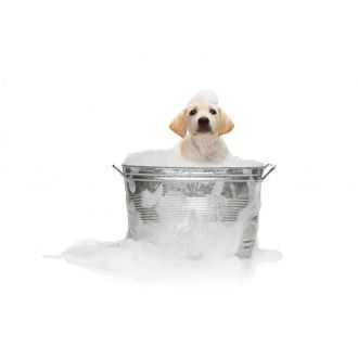 Šunų priežiūros priemonės | Alphazoo.lt