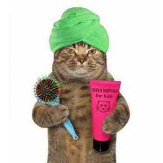 Priežiūros priemonės katėms internetu | Alphazoo.lt