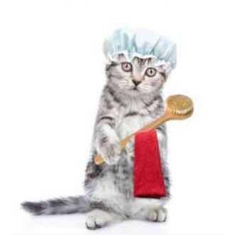 Odos ir kailio priežiūros priemonės katėms | Alphazoo.lt