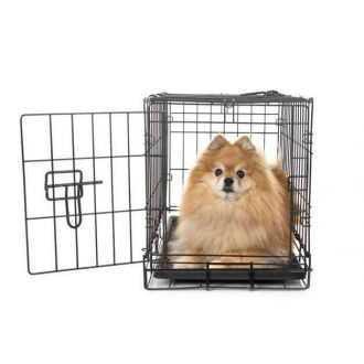 Guolis šuniui (dideliam, mažam), kelionių ir namų įranga internetu pigiau | Alphazoo.lt