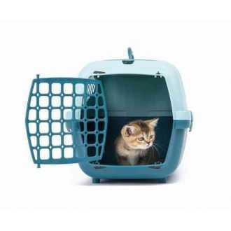 Kačių nešioklės internetu | Alphazoo.lt