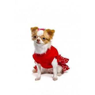 Drabužiai - rūbai šunims internetu | Alphazoo.lt